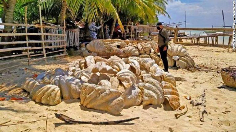 Filipinet kapin predha të fosilizuara të molusqeve me vlerë 25 milion dollarë