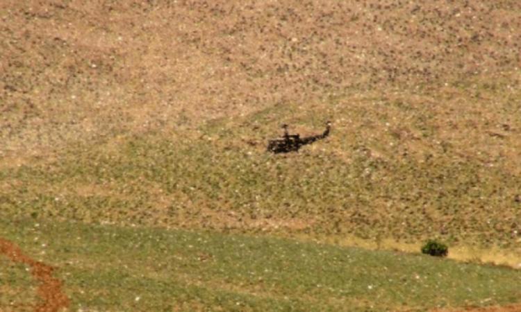 """Libani """"pushtohet"""" nga karkalecat e shkretëtirës, fermerët e alarmuar, u kërcënohen të mbjellat"""